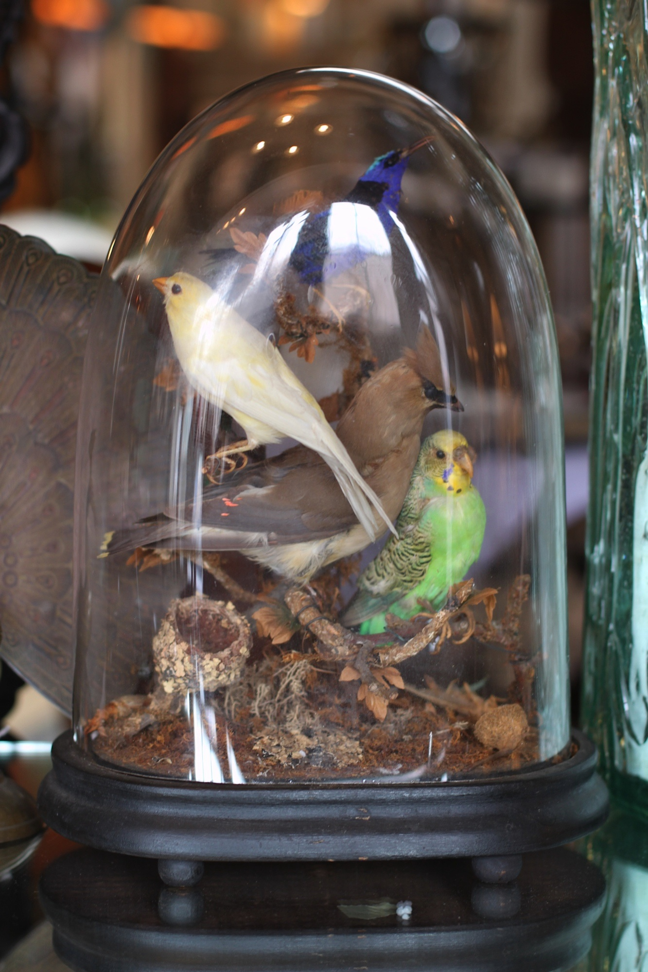 Parakeet And Friends Under Glass Bedford House